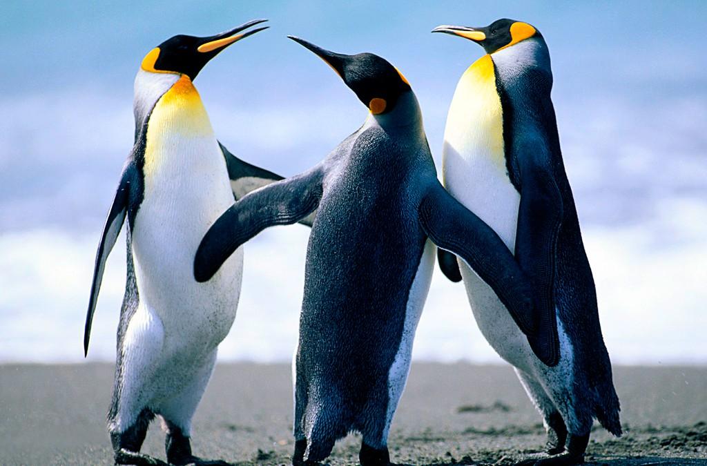 Penguins are amazing